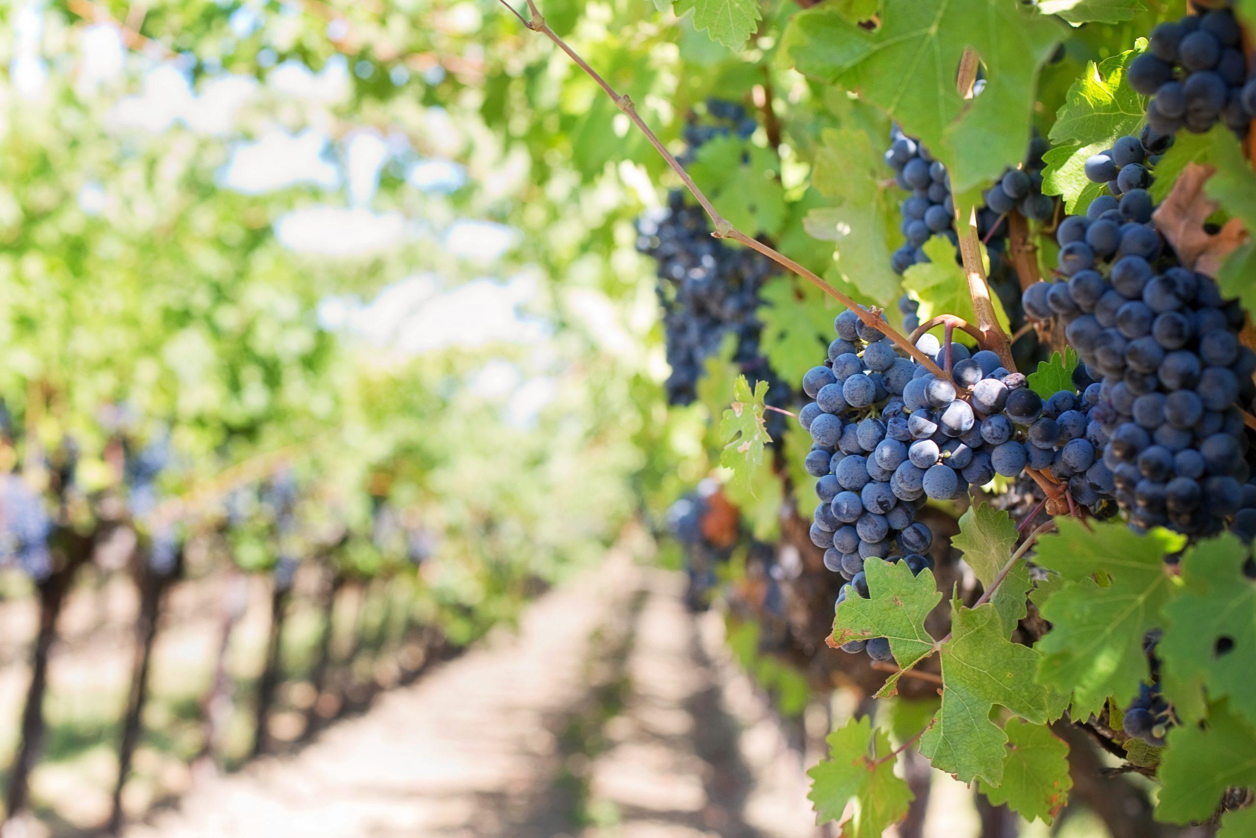 Het ontstaan van wijnmerk Paul Mas